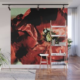 one red poppy Wall Mural