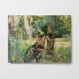 Tuscan Kitten Metal Print
