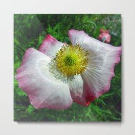 Garden Poppy Metal Print
