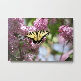 Swallowtail butterfly On Lilacs Metal Print