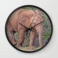 baby elephant Wall Clocks featuring Baby Elephant by Lynn Bolt