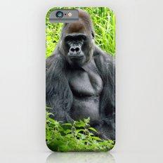 Pertinax Slim Case iPhone 6