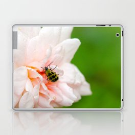 Cucumber Beetle & Winter Rose Laptop & iPad Skin