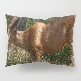 Mule Deer At Zion Park Pillow Sham