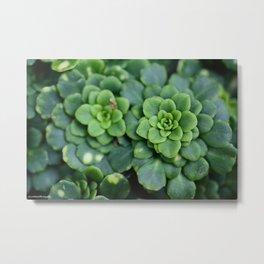 Summer Succulents Metal Print