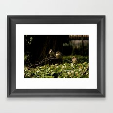 Birds of a Feather. Framed Art Print
