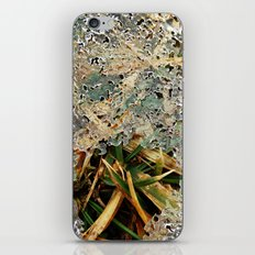 Nature Frozen Over iPhone & iPod Skin