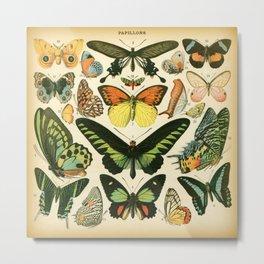 Papillons 2 Metal Print