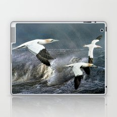 Gannets Skimming The Waves Laptop & iPad Skin
