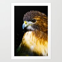 falcon Art Prints featuring FALCON by MY MEMORY IS SHOT