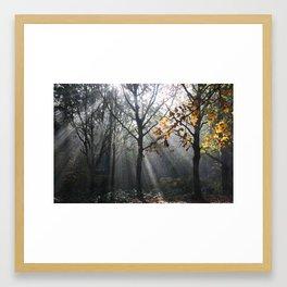 Autumn Sunbeams Framed Art Print
