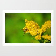 Paper Wasp - Yellow Flowers Art Print