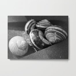 Photography black and white snail Metal Print