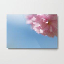 Japanese Spring - Prunus serrulata 2 648 Metal Print