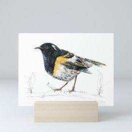 Hihi, New Zealand native Stitchbird Mini Art Print
