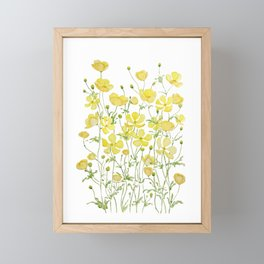 yellow buttercup flowers filed watercolor  Framed Mini Art Print
