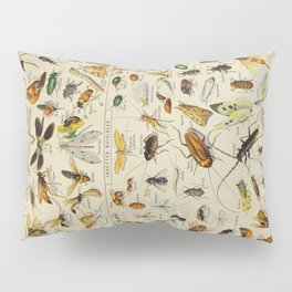 Insects Vintage Scientific Illustration French Language Encyclopedia Lithographs Educational Pillow Sham