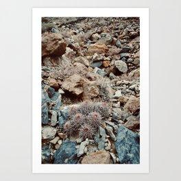 A Bushel of Barrel Cacti Art Print
