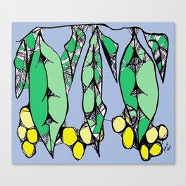 Wattle Canvas Print