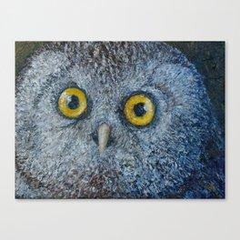 Boreal Owl (Aegolius funereus) Canvas Print