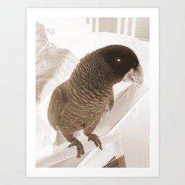 Free bird Art Print