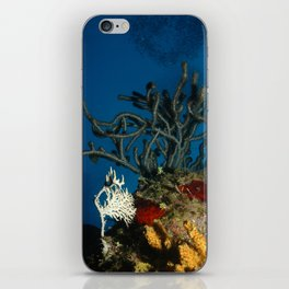Coral Bubbles iPhone Skin