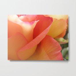 Two-Tone Roses #6 Metal Print