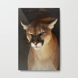 I'm Not Going To Eat You...Wink Metal Print