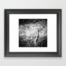 Algae Framed Art Print
