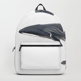 Sei whale (Balaenoptera borealis) Backpack