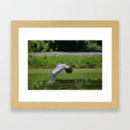 Herron in Flight Framed Art Print