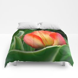 Young Red Tulip with Green Leaves ~ Close Up of Flower Bloom in a Spring Tulip Bed Comforters