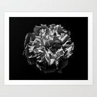 Backyard Flowers In Black And White 3 Art Print