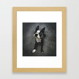 BOSCO (rescue pup) Framed Art Print