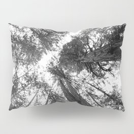 Muir Woods - California Pillow Sham