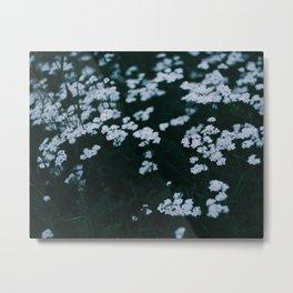 Blue hour, white flowers Metal Print