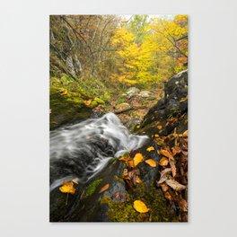 Cascade and Tree.  Doyle's River, Shenandoah National Park. Canvas Print