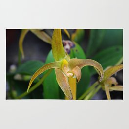 Golden Epidendrum Rug