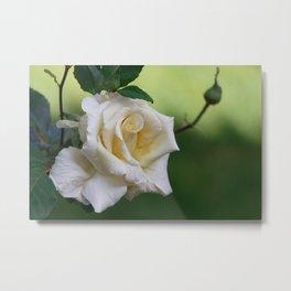 Beautiful Cretan Rose Metal Print