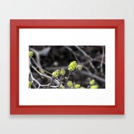 Green Bud Framed Art Print