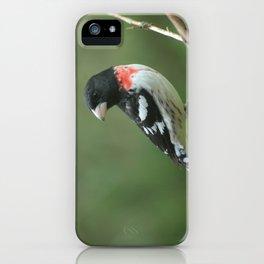 Male Red Breasted Grosbeak iPhone Case