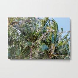 Palm Branches Metal Print