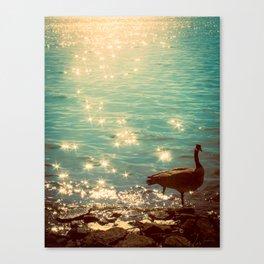 Showering in Sparkling Sunshine Canvas Print