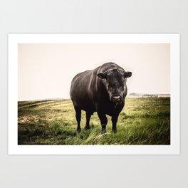 Big Black Angus Bull Art Print