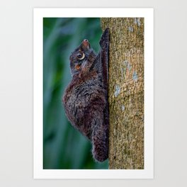 Malayan Flying Lemur Art Print