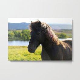 Icelandic Horse #1 Metal Print
