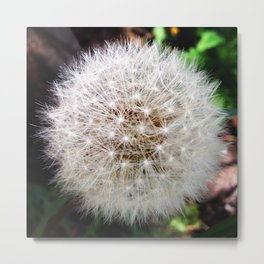 stellar flower Metal Print
