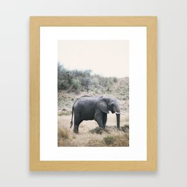 Momma elephant Framed Art Print