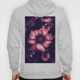 The Beauty Hoody