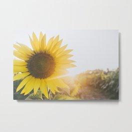 Golden Sun, IV Metal Print